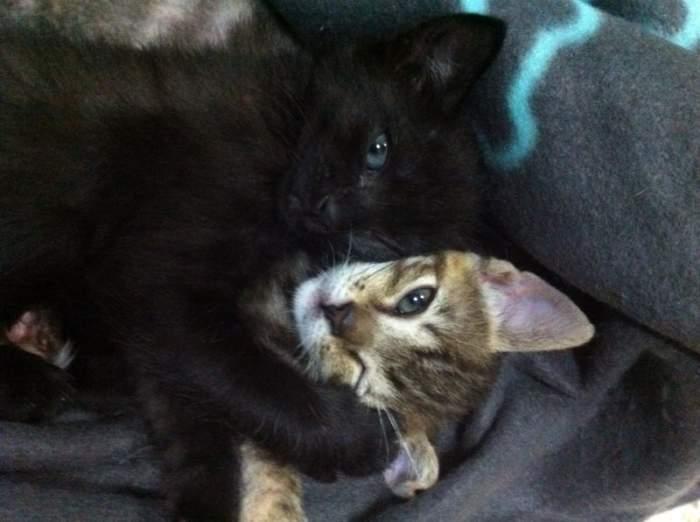 Lili y Lala